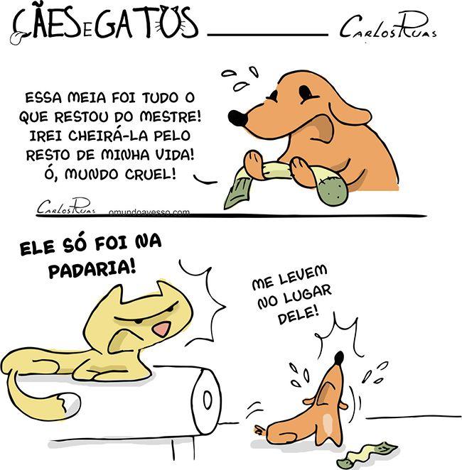 Cães e Gatos 7