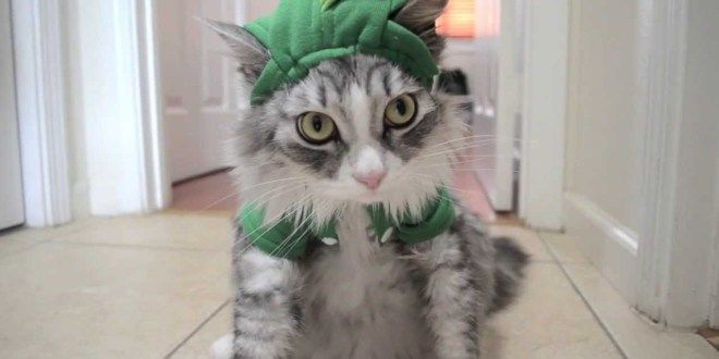 This Cat's Reaction to Dinosaur Costume is Priceless