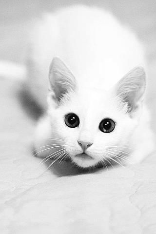 """* * """" Why der be dozens of humans arguin' overs me? I hears 'white cat' -  dat a drop line?"""""""