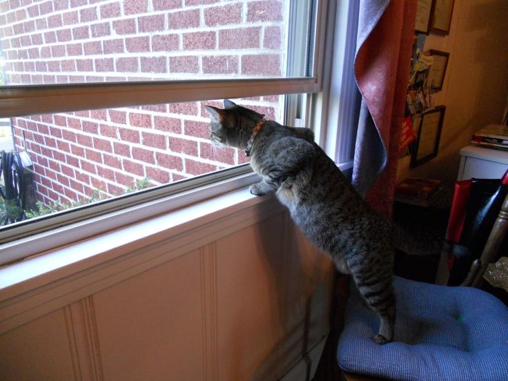 loves the windows open!: Windows Open