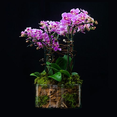 Floricultura :: Arranjos de Orquídeas no Rio de Janeiro - RJ