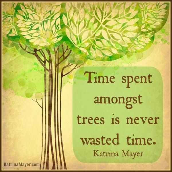 Time spent amongst trees is never wasted time.  #time #nature #trees #quotes