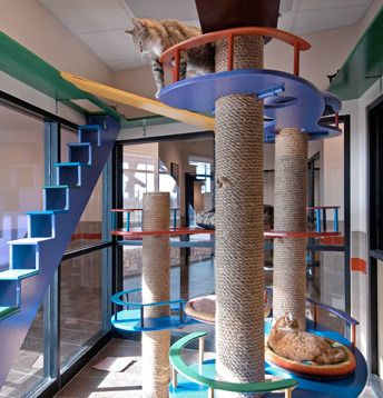 giant cat play structure in humane society adoption facility that is
