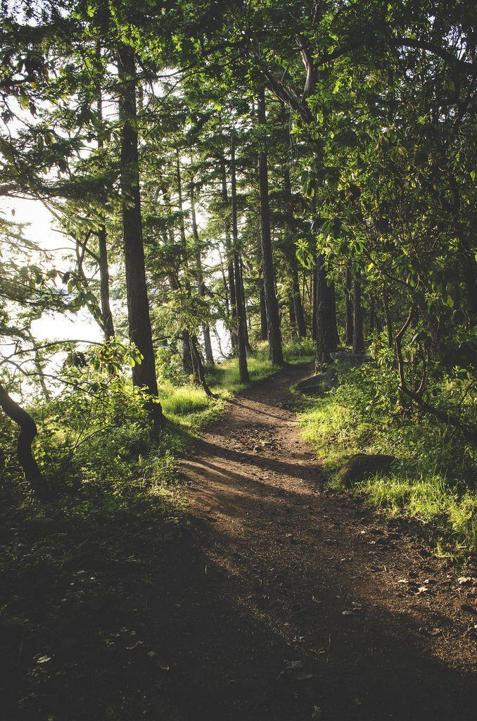 Morning Walking Path