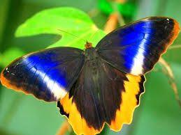 Картинки по запросу бабочки