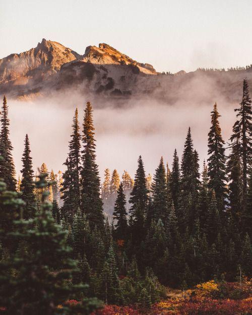 Fall Colors in Mt Rainier National Park.by Nicholas Peter Wilson