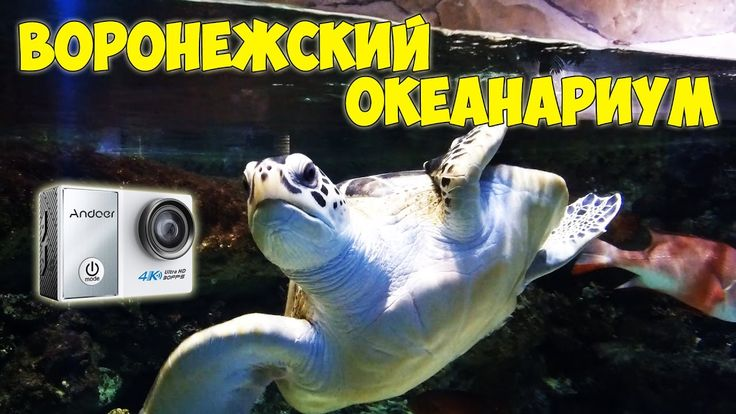 Воронежский океанариум   Тест экшн камеры Andoer C5 Pro