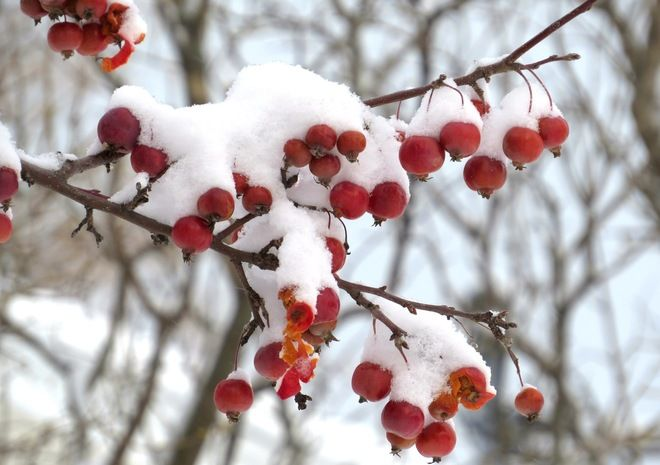 Une multitude de fruits, by Jacqueline Bellemare, Petit-Rocher, N.B.
