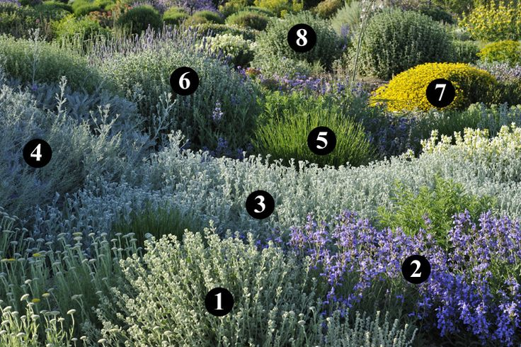 100 ideas to try about tuin idee n gardens delphiniums for Jardin sec