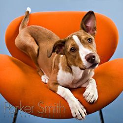 How to photograph your pets like a pro Three professional pet photographers offer advice on taking perfect pictures.