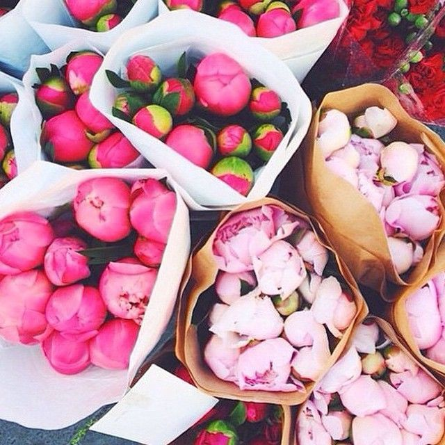 Shades of pink peonies. #flowers #blooms