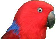 Friends of the Aviary - Hamilton #parrots #parrot #petbirds #companionparrot #birdclub