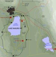 Safari i Tanzania och Kenya: Lake Nakuru National Park