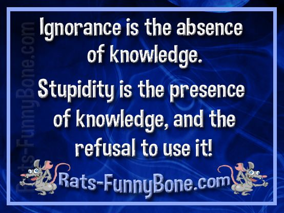 Funny Quotes About Stupidity And Ignorance Abycamp