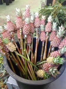 pineapple wedding flowers - Google Search