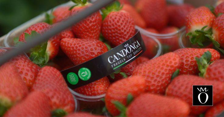 Di nuovo lunedì. Buon inizio settimana da Candonga Fragola Top Quality! #candongatop #fragole