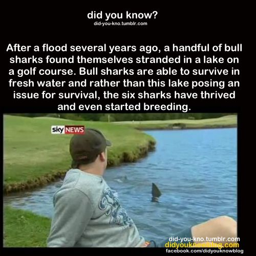 did you know?: Photo talk about a heck of a hazard!
