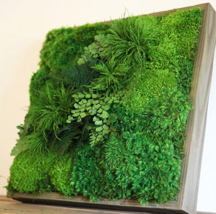 настенные растение фото точка съемки