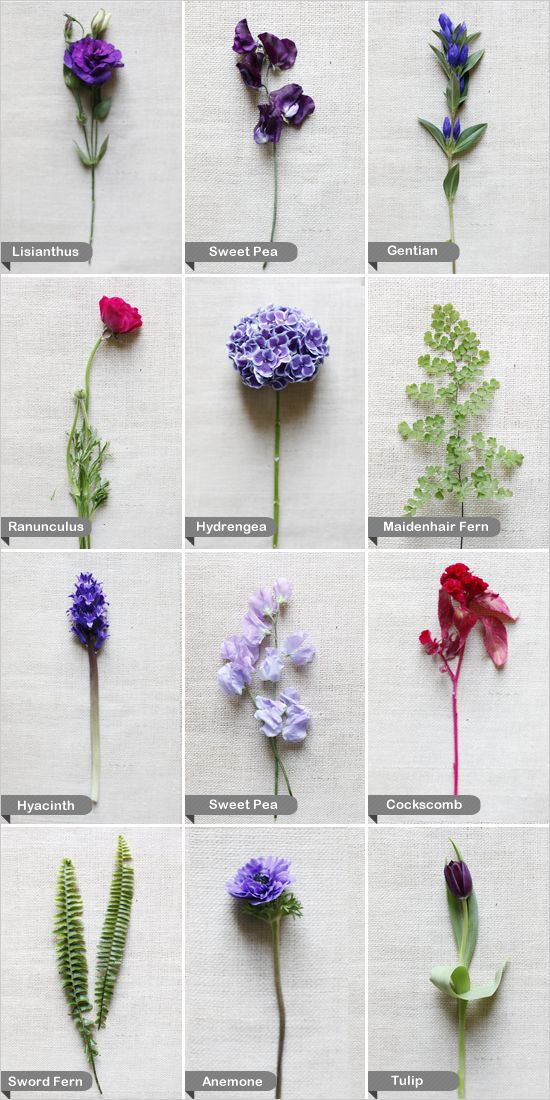 Purple and Red Wedding Flowers - Sword Fern, Anemone, Tulip, Hyacinth, Sweet pea, Cockscomb, Ranunculus, Hydrangea, Maidenhair Fern, Lisianthus, Gentian