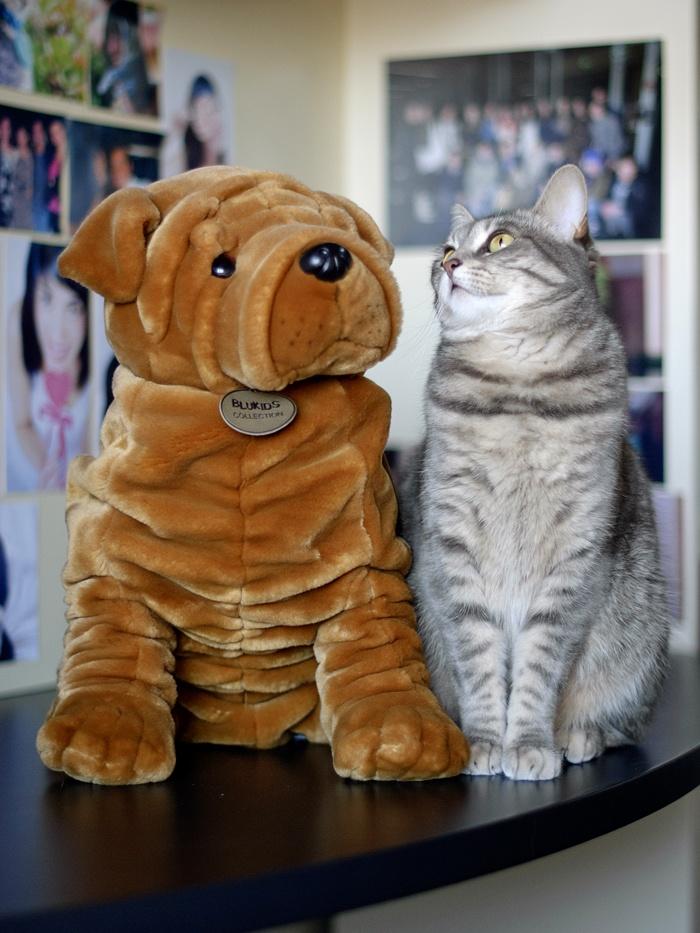 Kiki and her best friend! #friend #kikithesweetycat #cat #kiki #cute #nice #animals #dog #peluche #eyes #gatto #gatta #pursesandi
