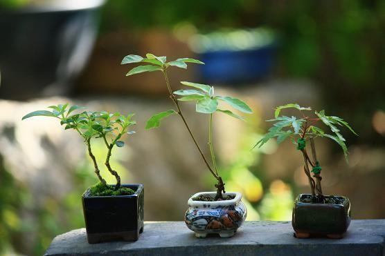 #garden #pots mini