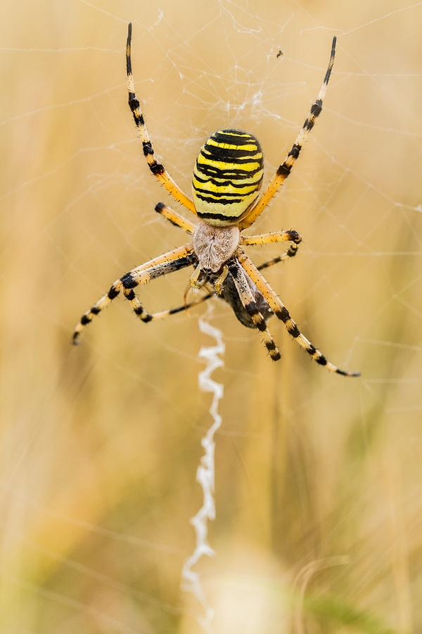 how to kill spiders in your yard