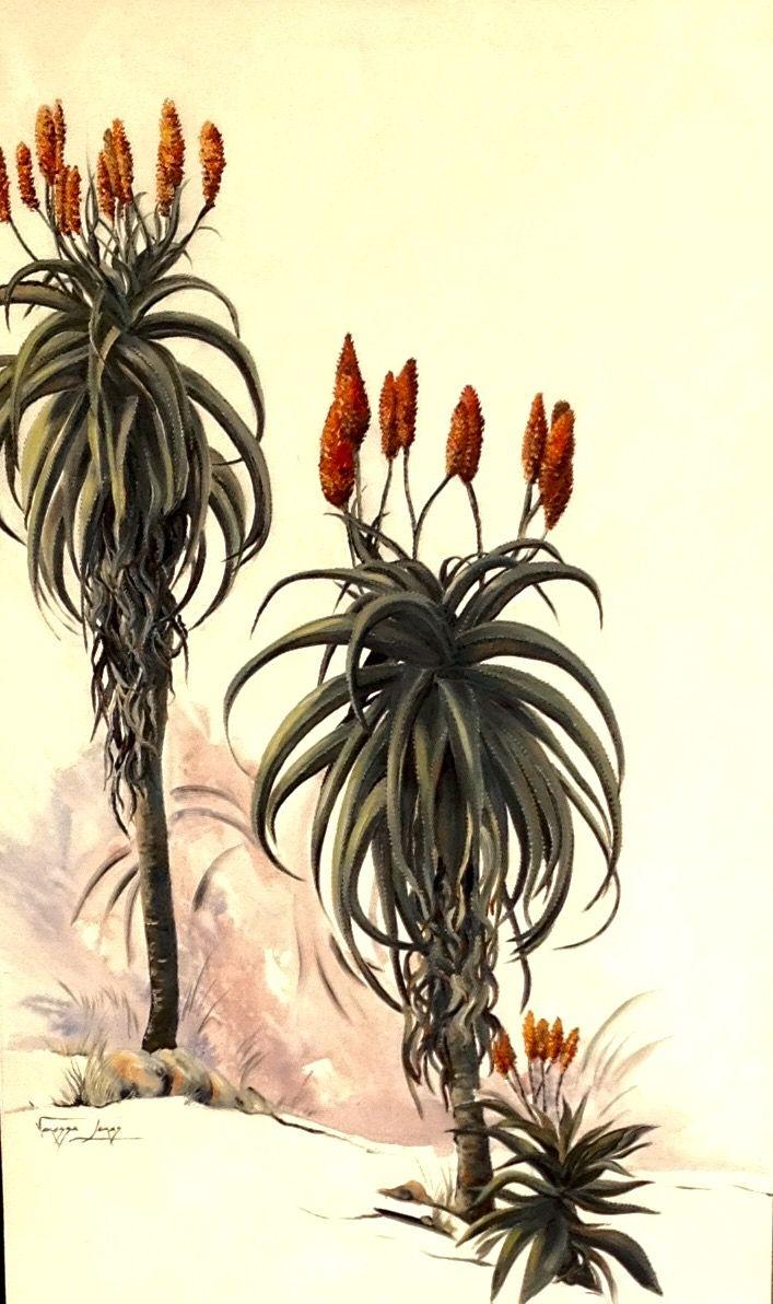 Aloes, 100 X 150 cm, oil on canvas