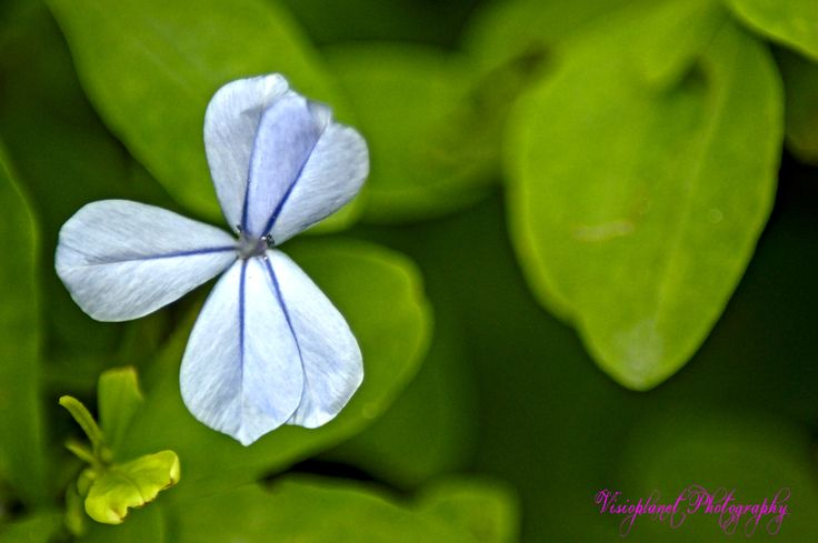 Unique #Flora #Flowers #Hyderabad #Nature #NaturePhotography #RamojiFilmCity #Wildlife #WildlifePhotography