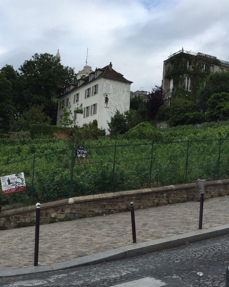 Clos Montmarte Vineyard, Rue de Saules, Montmarte, Paris. Photo taken by Tony Retkowski.