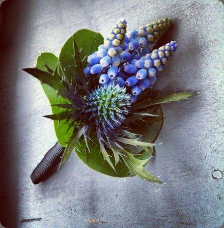 muscari / planet flowers