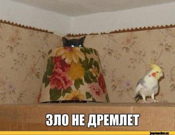 SOON,котэ,прикольные картинки с кошками,попугай