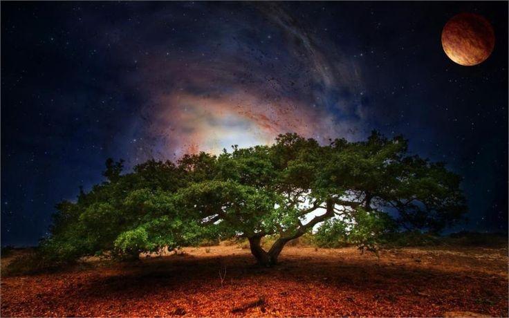 Природа Пейзаж, Креативный дизайн дерево Galaxy планета 4 Размеры Украшения Дома Холст Печати Плакатов