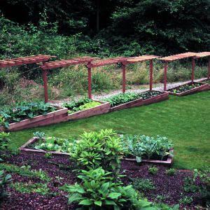 11 best Vegetable Garden images on Pinterest Vegetable garden