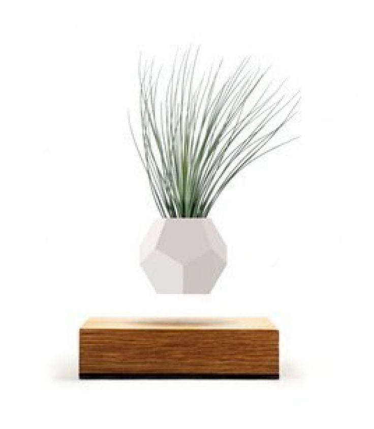Lyfe consists of a planter that hovers over an oak base via magnetic levitation designed