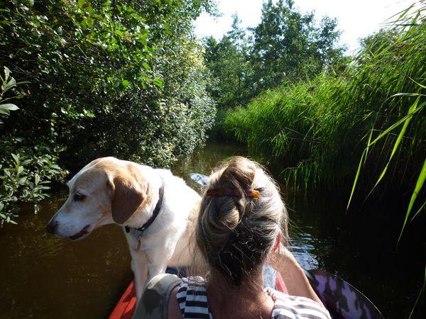 Kanoën met de honden. Het is nog steeds heerlijk weer, maar je ruikt en voelt dat de herfst dichtbij is. De eerste bladeren liggen op het erf en de zomer loopt op z'n eind … Bericht ui het Weblog van Marion Pannekoek