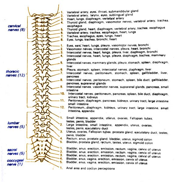 spinal cord injury levels and function chart - Google Search