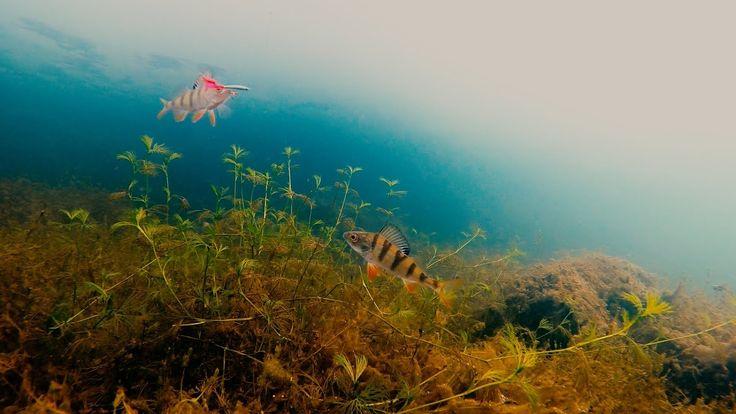 Зимняя рыбалка. Ловля окуня на блесну и балансир. Подводные съемки