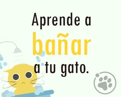 Aprende a bañar a tu gato https://www.facebook.com/notes/orbita-pets/amigos-orbita-petsaprende-a-ba%C3%B1ar-a-tu-gato/548136161996677