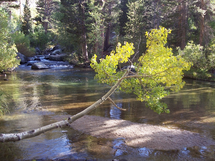 51 best fly fishing in california images on pinterest for Fly fishing spots near me