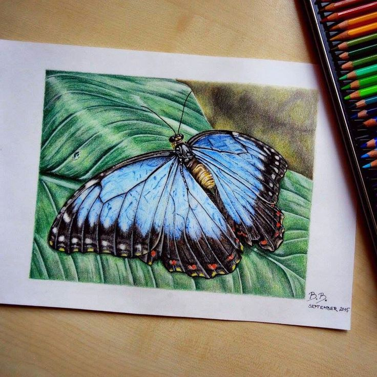 My last drawing, butterfly on the leaf.  Koh-I-Noor pencils