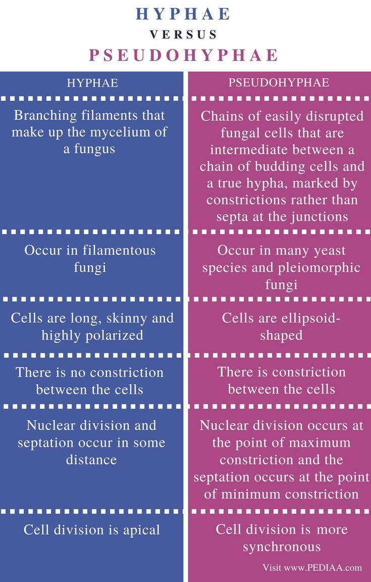 Difference Between Hyphae and Pseudohyphae Different