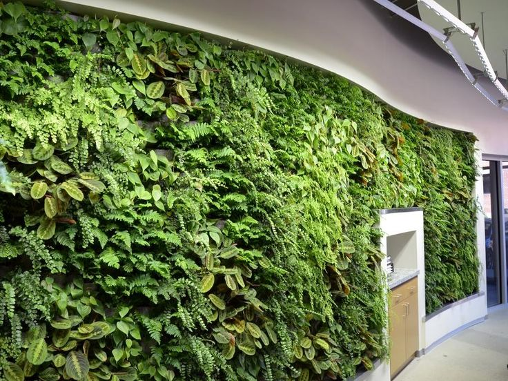 Arch Nexus Green Wall Urban Green Green Wall Wall Lights