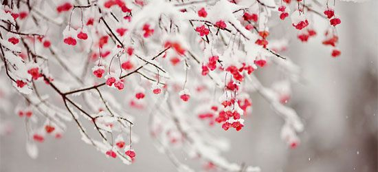 Winter frost Facebook Cover photo