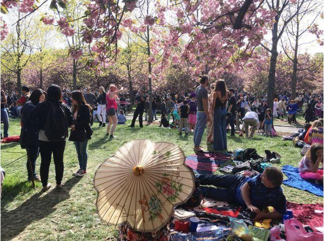 Türkiye'de de sakuralara çok benzeyen kiraz çiçekleri aynı dönem açsa da, bizde böyle kutlamalar yapılmadığı için duymamış olabilirsiniz. Sakuralar kuzey yarımkürede Mart sonu itibariyle açmaya başladığında, onlarca şehirde kutlanan festivallerle her yıl milyonlarca kişi par…