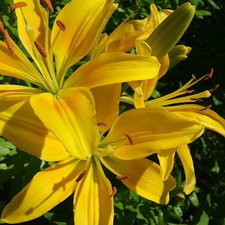 Its very beautiful out today . ----------- #flowers  #gamergirl #gamer #beautiful #nature #aesthetic #clouds #thunderstorm #rain #sky #horizon #sunset #sunrise #nebraska #photographer #photography #lily #yellow http://misstagram.com/ipost/1548603315695592818/?code=BV9voLCByVy