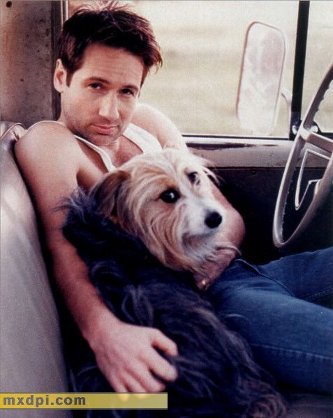 David Duchovny - yes please!