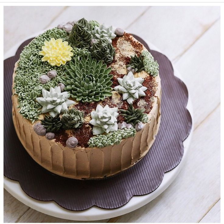 Succulent on a cake !! @ivenoven
