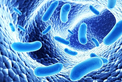 3 Top Strains of Probiotics - Lucky Blog – The LuckyVitamin.com ...
