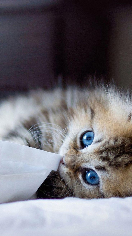 Kitten Wallpaper Iphone New Kitten Wallpaper Iphonefor Iphone Wallpa With Images Kittens Cutest Kitten Wallpaper