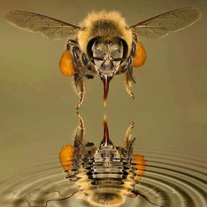 "Bee ~ ""Ripple Effect!"" (https://s-media-cache-ak0.pinimg.com/originals/92/ea/b9/92eab9094d4a0bc1280c6999b7202a24.jpg )"